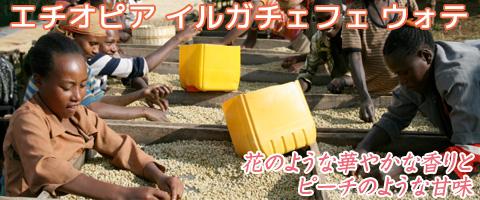 スペシャルティコーヒー エチオピア イルガチェフェ ウォテ