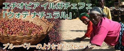 スペシャルティコーヒー エチオピア産イルガチェフェ 「ウォテ ナチュラル」